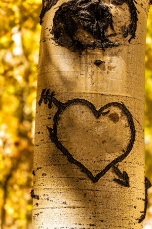 Hand carved heart in Aspen tree trunk