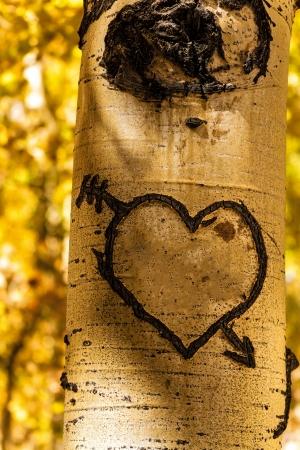 Hand carved heart in Aspen tree trunk