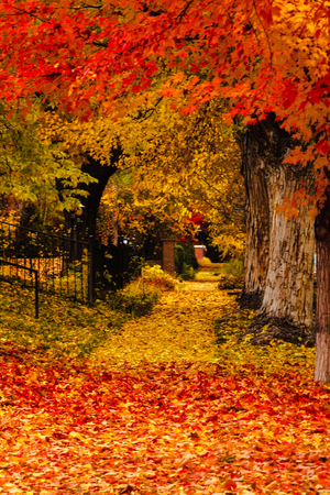 Brightly colored fallen leaves cover sidewalk in autumn city scene photo