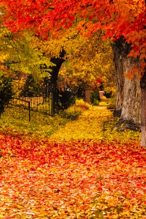 Autumn along city street with brightly colored leaves covering sidewalk Stock Photo