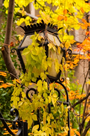 capital of colorado: Wrought iron street lamp covered with brightly colored leaves on crisp autumn afternoon Stock Photo