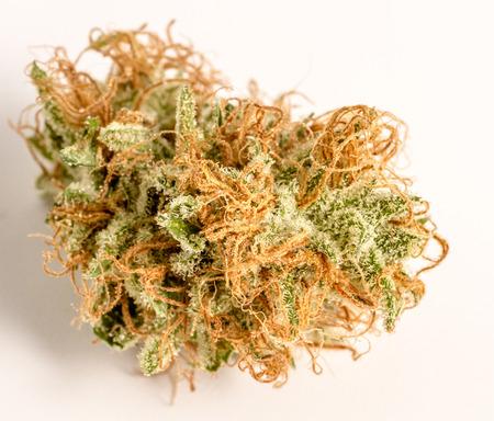 Close up of medicinal marijuana buds oh white background Stock Photo