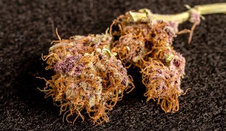 Close up of medicinal marijuana buds on black background