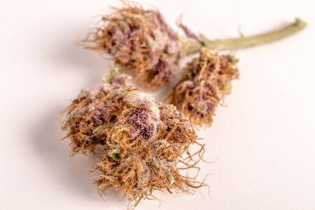 medicinal marijuana: Close up of medicinal marijuana buds oh white background Stock Photo