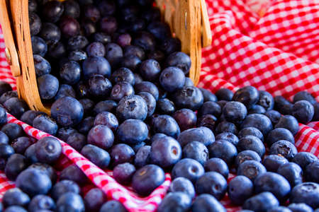 Fresh organic blueberries spilling out of wicker basket sitting on red gingham napkin photo