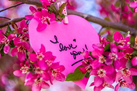 Pink heart with I love you message hanging on blooming crab apple tree photo