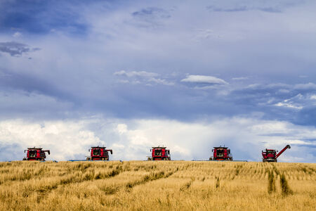 transportaion: Row of red modern combines harvesting field of wheat with dramatic summer sky Stock Photo