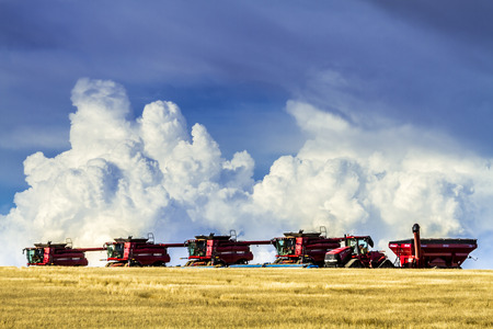 combines: Row of red modern combines harvesting field of wheat with dramatic summer storm sky