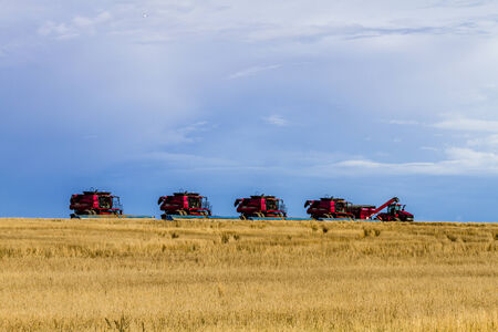 combines: Row of red modern combines harvesting field of wheat with dramatic summer sky Editorial