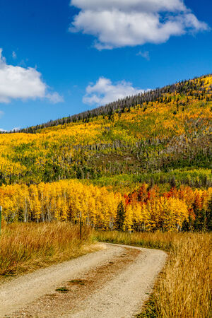 dirt road recreation: Mountain side filled with brightly colored yellow, orange and green fall trees with dirt road curved in foreground