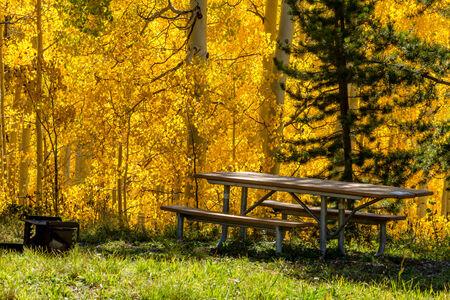 national forest: Mesa de picnic y parrilla en el sitio de picnic en el bosque nacional de lleno con el cambio de los �rboles amarillos de Aspen en la tarde de oto�o Foto de archivo