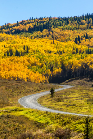 dirt road recreation: Mountain slopes filled with changing yellow, orange and green Aspen trees and dirt road winding through forest on sunny fall morning Stock Photo