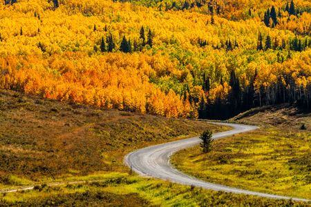 Mountain slopes filled with changing yellow, orange and green Aspen trees and dirt road winding through forest on sunny fall morning photo
