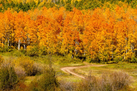 dirt road recreation: Close up of mountain slope filled with changing yellow, orange and green Aspen trees and dirt road winding through forest on sunny fall morning