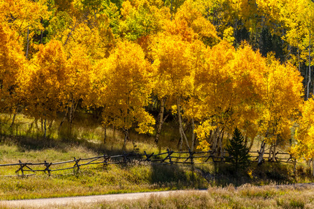 dirt road recreation: Rustic wooden ranch fence lining dirt road against brightly colored changing yellow Aspen trees on sunny morning Stock Photo