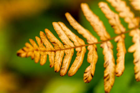 Close up of forest fern leaf turning brown on sunny fall day