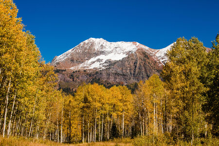 freshly fallen snow: Appena caduta neve sulle montagne lungo Kebler Pass vicino a Crested Butte Colorado sulla soleggiata mattina caduta