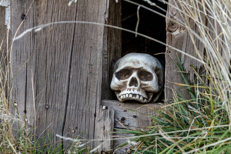 goblins: Creepy Halloween skull in hole in old abandoned wood building Stock Photo