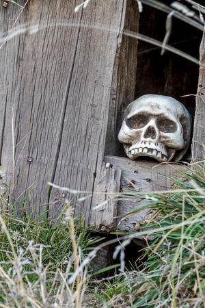 Scary Halloween skull in hole in old abandoned wood building photo