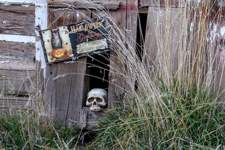 Creepy Halloween skull in hole in old abandoned wood building Stock Photo