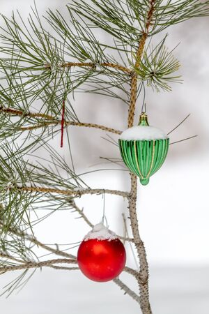 freshly fallen snow: Snow covered red and green Christmas ornaments hanging outside on pine tree branches in freshly fallen snow