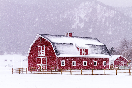 barns winter: Bright red barn covered with snow surrounded with wooden fence on snowy winter day