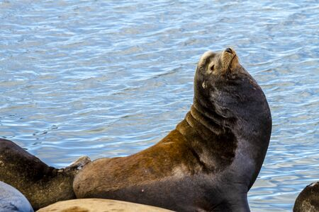 pacific ocean: Sea lion posing in sun on pier in river off northwest coast of the Pacific ocean Stock Photo