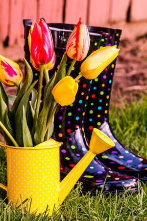 polka dotted: Yellow and orange tulip stems in yellow polka dotted watering can sitting next to multi-colored polka dot gardening boots