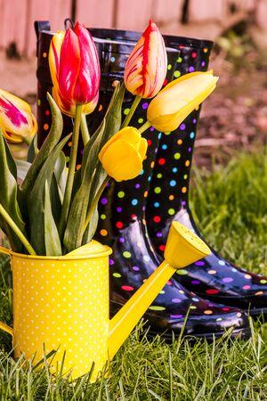 polka dotted: Amarillo y naranja tulip�n se deriva en polca amarilla punteada riego puede sentarse al lado de lunares botas de jardiner�a multicolores Foto de archivo