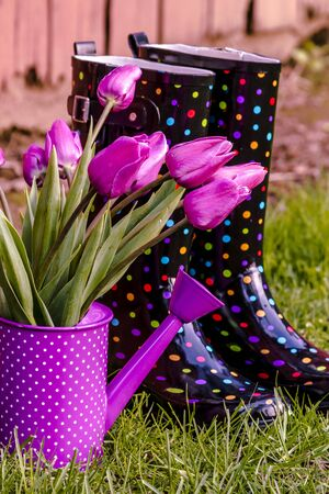 Purple tulip stems in purple polka dotted watering can sitting next to multi-colored polka dot gardening boots