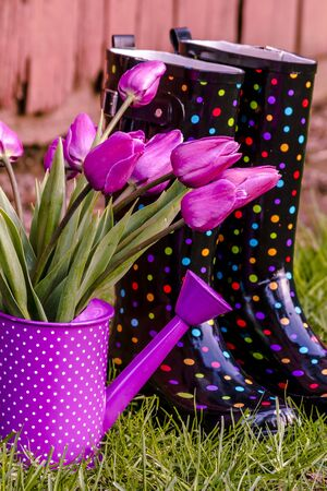 polka dotted: Purple tulip stems in purple polka dotted watering can sitting next to multi-colored polka dot gardening boots