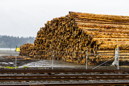 logging industry: Large pile of harvested and cut tree trunks in log yard ready for transport to mill