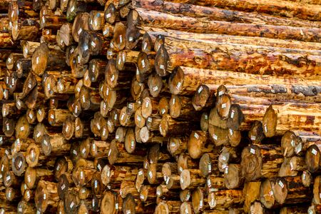 logging industry: Close up of large pile of harvested and cut tree trunks in log yard ready for transport to mill