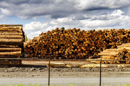 logging industry: RAINIER WASHINGTONU.S.A. - April 6, 2015: Large piles of harvested and cut tree trunks in log yard ready for transport to mill on April 6, 2015 Rainier Washington Editorial