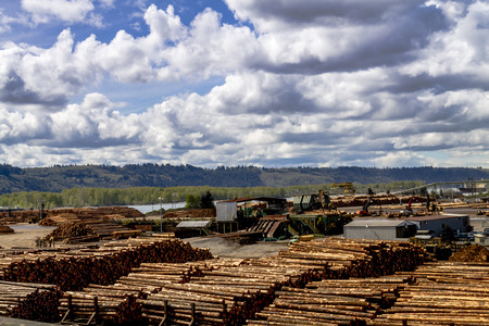 logging industry: RAINIER WASHINGTONU.S.A. - April 6, 2015: View of large logging operation on Columbia River with large piles of harvested and cut tree trunks ready for transport to mill on April 6, 2015 Rainier Washington