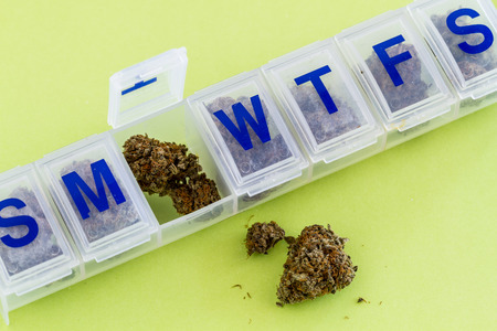 ganja: Medical marijuana buds in daily pill organizer sitting on green background