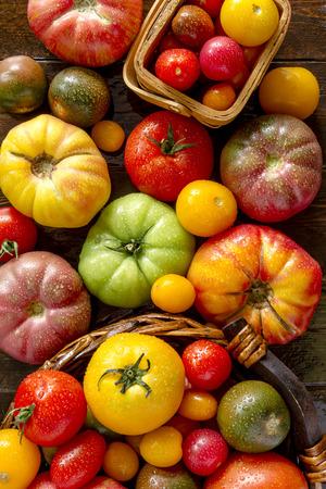 木製のテーブルの上に座って新鮮なオーガニック ・ エアルーム トマトのカラフルな品揃え 写真素材