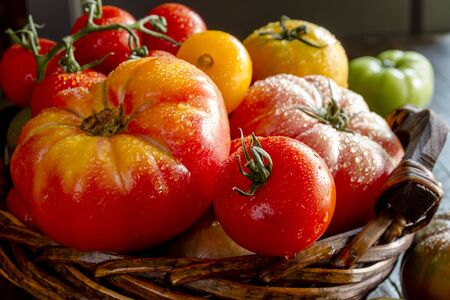 Assortment of colorful heirloom tomatoes with water drops in dark wooden basket