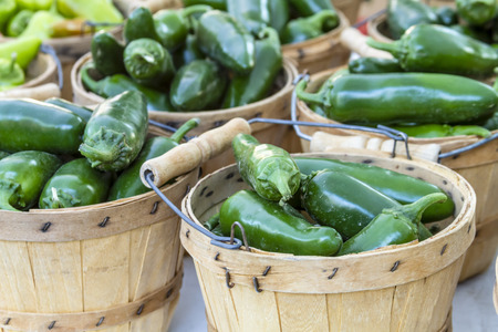 jalapeno: Fresh organic jalapeno peppers in brown bushel baskets