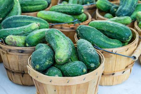 bushel: Fresh organic pickles in brown bushel baskets