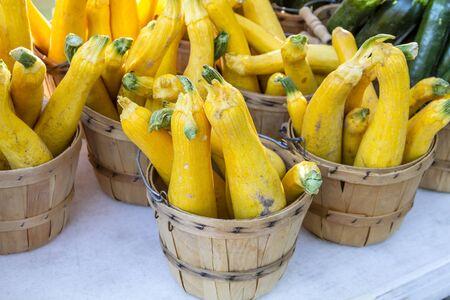 bushel: Fresh organic yellow zucchini squash in brown bushel baskets