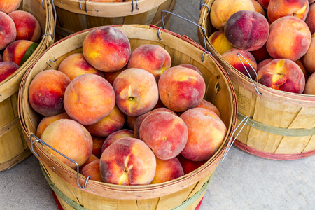 roadside stand: Large bushel baskets filled with fresh from the orchard organic yellow peaches for sale at roadside produce stand Stock Photo