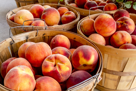 peach: Many large bushel baskets filled with fresh from the orchard organic yellow peaches for sale at roadside produce stand