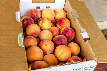 roadside stand: Large box of fresh picked yellow Colorado peaches for sale at local roadside produce stand Stock Photo