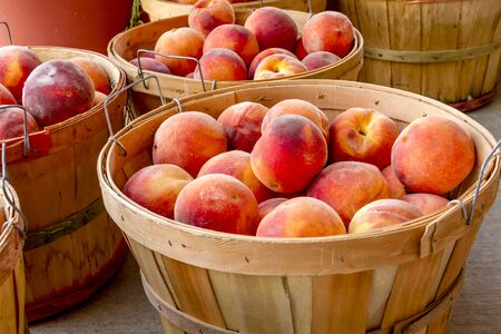 roadside stand: Many large bushel baskets filled with fresh from the orchard organic yellow peaches for sale at roadside produce stand
