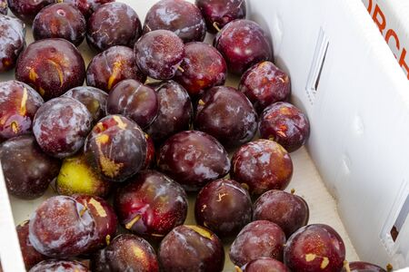 roadside stand: Large white box filled with freshly picked red plums from orchard for sale at roadside produce stand