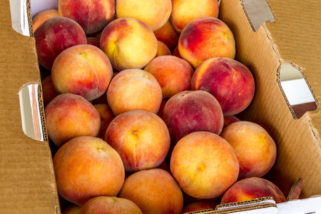 organically: Close up of large box of fresh picked yellow Colorado peaches for sale at local roadside produce stand Stock Photo
