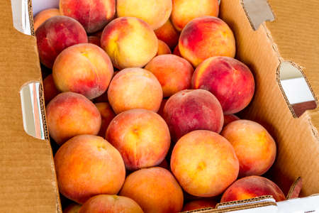 roadside stand: Close up of large box of fresh picked yellow Colorado peaches for sale at local roadside produce stand Stock Photo