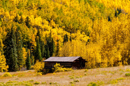co: Historic abandoned building of Colorado ghost town near Aspen CO, surrounded by fall color of the changing yellow Aspen trees