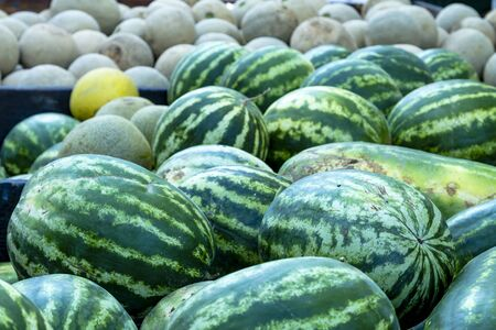 truckload: Truckload of farm fresh whole watermelons and cantaloupe melons at farmers market